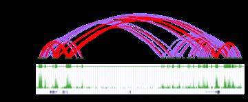 Exploring Genomic Regulation Through 3D Chromatin Topology