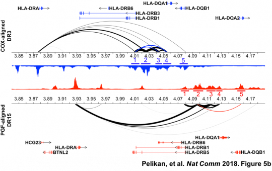 Discovering enhancer histone-QTLs that influence gene expression within chromatin networks